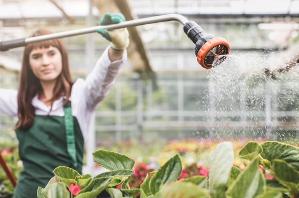 Woman watering plants in commercial garden nursery