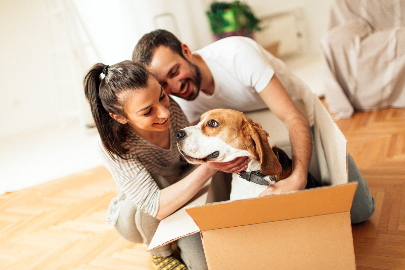 Couple moving with dog in box