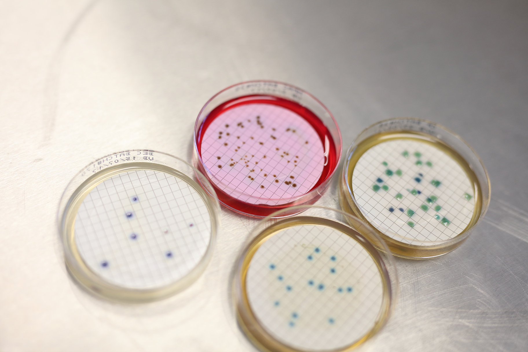 Cultures growing in petri dishes in Unitywater Laboratory