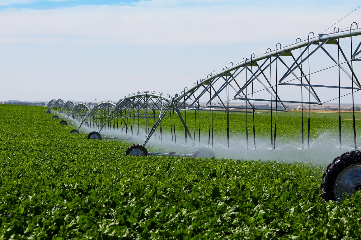 Recycled water irrigation of commercial food crop